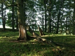 2013 Trees at Basket Tor PV