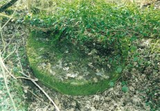 2004 Old Millstone outside Blantyre works