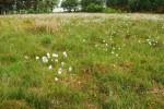 2010 Cotton Growing at Croftangreen by Jim Brown
