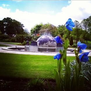 2015 Blue Poppies at David Livingstone Centre