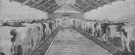 1930 Alex Craigs news shed Bellsfield Farm. Shared by G Cook
