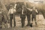 1920s Haytime at Udston
