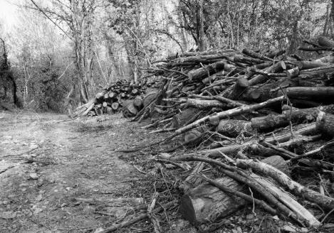 27662502-woodland-managemant-land-clearance-europe-countryside-landscape-stock-photo